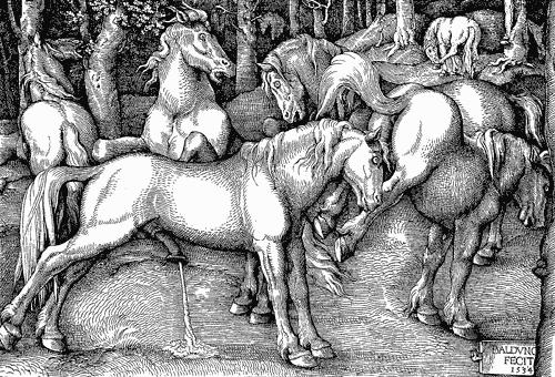 hevosen-siitin