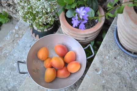 Kypsät aprikoosit ulkoilmassa ovat täydellinen jälkiruoka